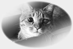 cat_kotetsu